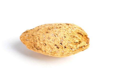 Single Almond Seed Close up isolated on a white background