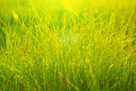 Photo pour Morning dew in the rays of the rising sun and stems of grass. Morning fresh grass. - image libre de droit