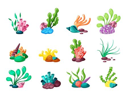 Illustration pour underwater plants. seaweed and seashells from ocean or sea life tropical laminaria exotic leaves in aquarium. vector set - image libre de droit