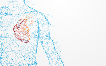 Photo pour Human heart anatomy form lines and triangles, point connecting network on blue background. Illustration vector - image libre de droit