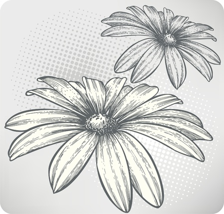 Blooming flowers, hand-drawing. Vector illustration.