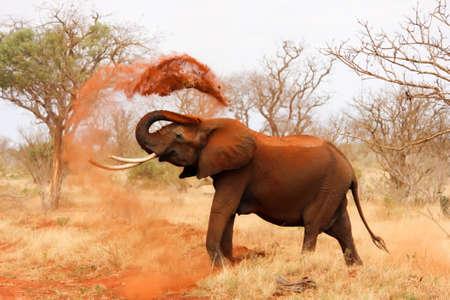 Photo pour elephant in the nature - image libre de droit