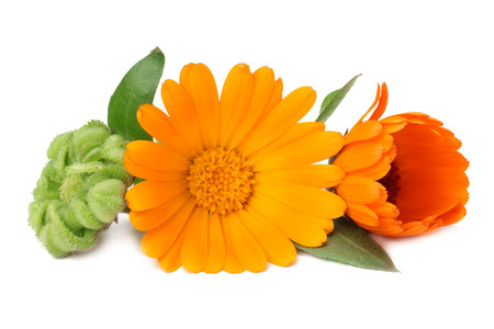 Photo pour marigold flowers with green leaf isolated on white background. calendula flower. - image libre de droit