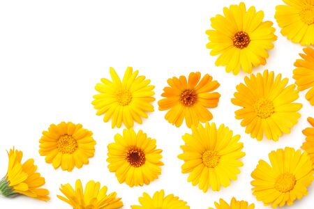 Photo for marigold flowers isolated on white background. calendula flower. top view - Royalty Free Image