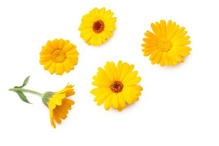 Photo pour marigold flowers isolated on white background. calendula flower. top view - image libre de droit