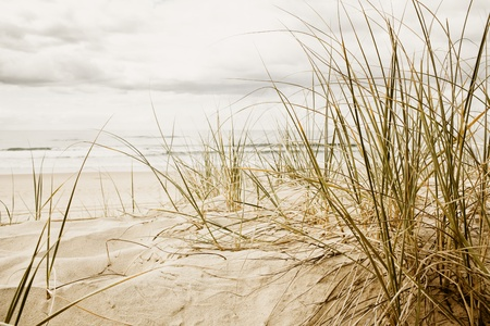 Close up of a tall grass on a beach during stormy season
