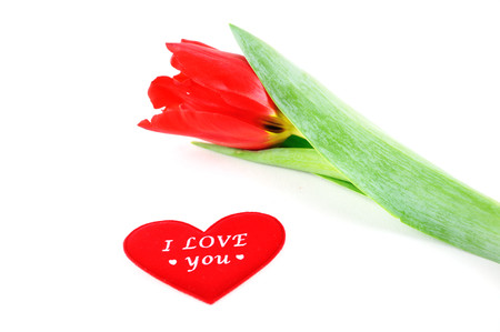 Photo pour Heart and tulip - image libre de droit