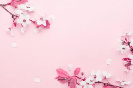 Photo pour Cherry tree blossom. April floral nature and spring sakura blossom on soft pink background. Banner for 8 march, Happy Easter with place for text. Springtime concept. Top view. Flat lay. - image libre de droit