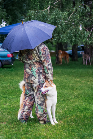 West Siberian Laika  near his master in the park on a walk in the rainy weather