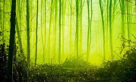 Photo pour Autumn forest in the morning fog in bright green tones - image libre de droit