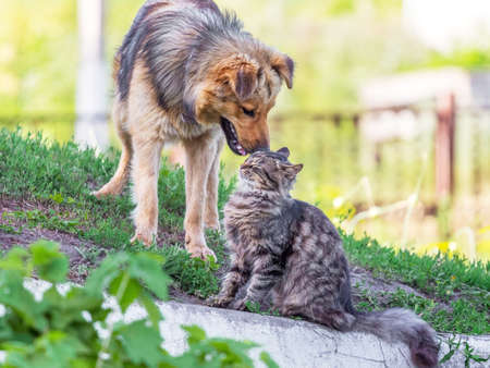 Foto de A cat and a dog next to the green grass in the summer. Cat and dog are friends - Imagen libre de derechos