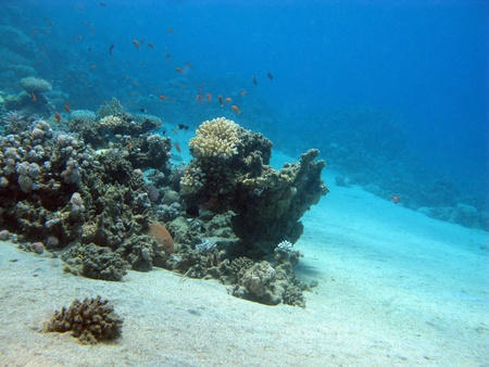 coral reef with exotic fishes