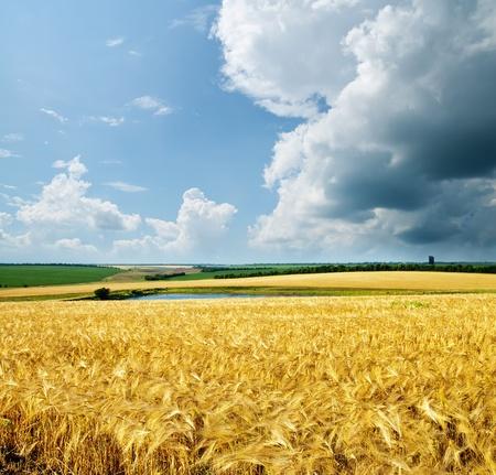 Photo pour gold wheat under cloudy sky - image libre de droit