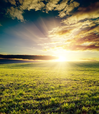 Photo for field of grass and cloudy sky on sunset - Royalty Free Image
