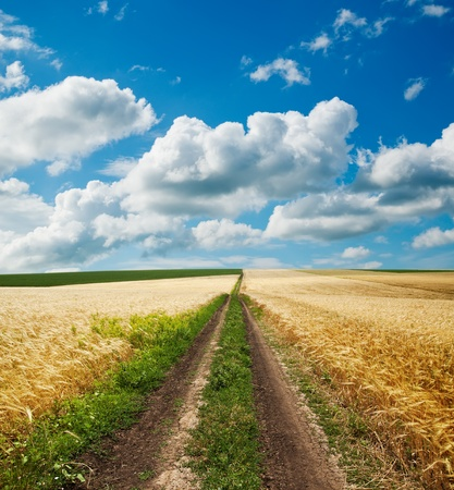 road in golden agricultural field under clouds