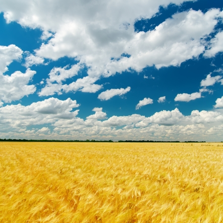 cloudy sky over field with golden harvest