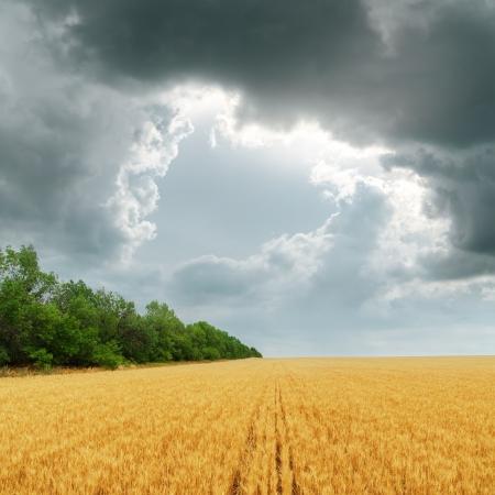 darken clouds over golden fi