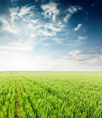Photo pour sunset in dramatic sky over green agriculture field in spring - image libre de droit