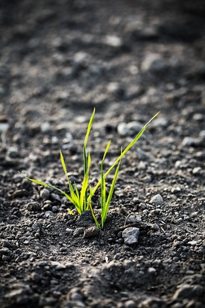 young plant on the ground