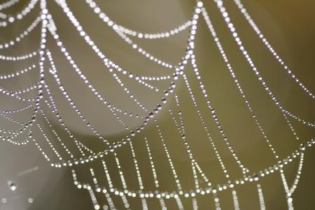 Photo pour The Spider Web close up. - image libre de droit