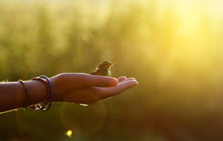 ecology concept - bird on a hand in the morning