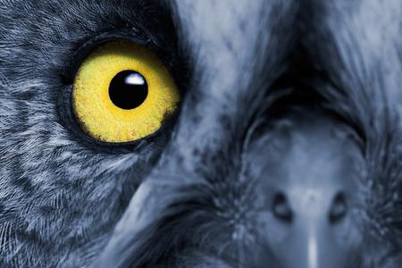 Photo pour Portrait Of The Great Grey Owl (Strix nebulosa). Night's effect. - image libre de droit