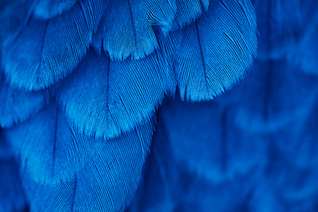 Foto de plumage background of bird close up - Imagen libre de derechos