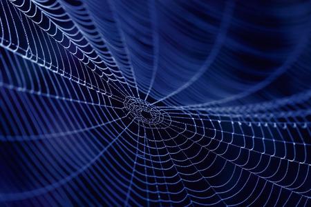 Photo pour Spider Web close up in the dark - image libre de droit
