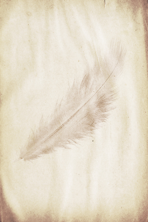 watermark in the form of a feather on the grunge paper