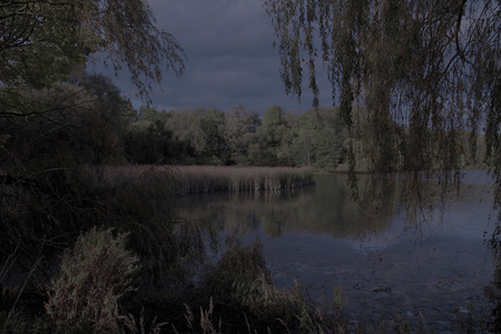night scene of a pond with trees and reed at the banks, Poodri, Czech Republic