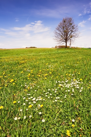 View of spring meadow with a tree with sky in background