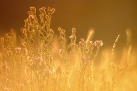 Soft Focus, at golden hour
