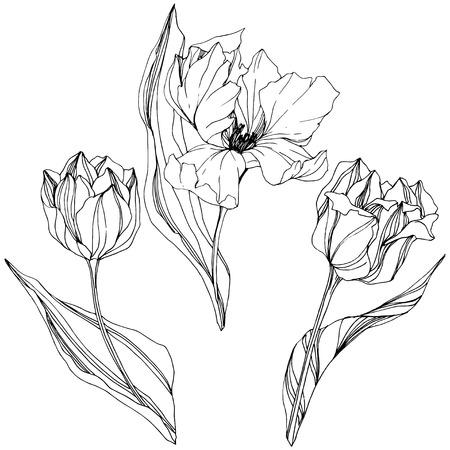 Illustration pour Vector Tulip Black and white engraved ink art. Floral botanical flower. Wild spring leaf wildflower isolated. Isolated tulip illustration element. - image libre de droit