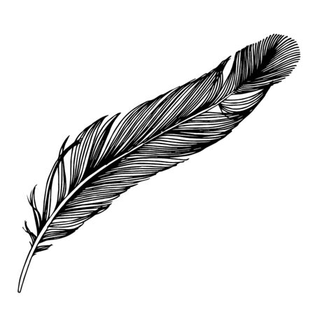 Illustration pour Vector bird feather from wing isolated. Black and white engraved ink art. Isolated feathers illustration element. - image libre de droit