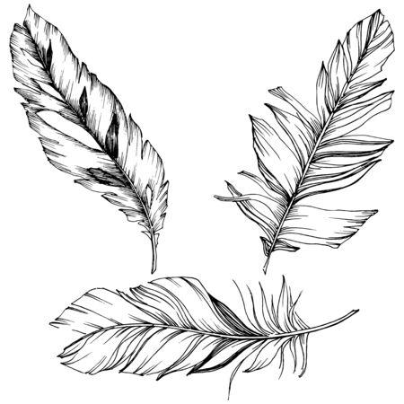Illustration pour Vector bird feather from wing isolated. Isolated illustration element. Black and white engraved ink art. - image libre de droit