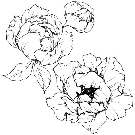 Illustration pour Wildflower peony in a vector style isolated. Black and white engraved ink art. - image libre de droit