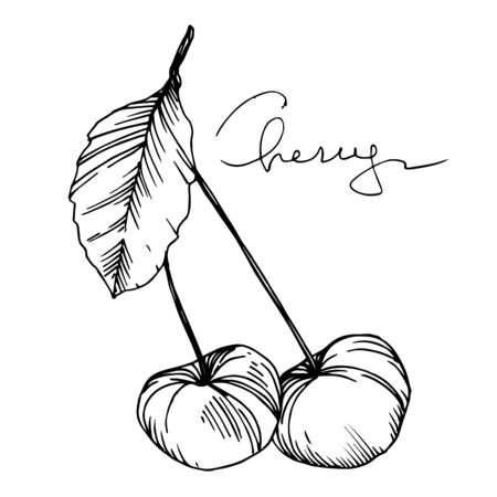 Illustration pour Vector Cherry healthy food. Black and white engraved ink art. Isolated berry illustration element. - image libre de droit