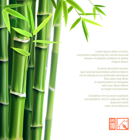 Background with bamboo. Vector illustration, eps10, editable.