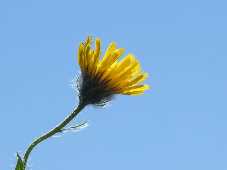 33 Flower, Nature, Mountain, Berg, Blume, Natur, Alpine