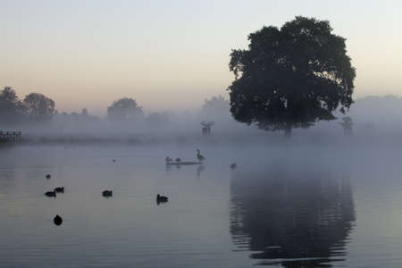 A cool blue misty morning at a lake in Bushy Park, London, England.  Taken on a cold autumn day.