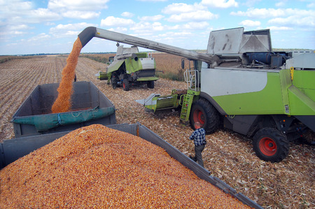 Big farms use a lot of combines and trucks to gather the grain as quick as possible.