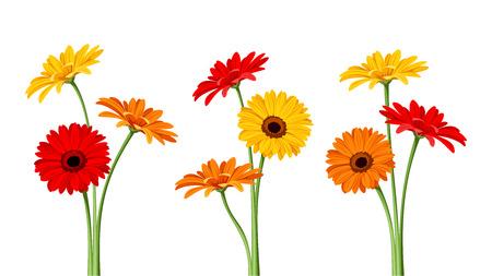 Illustration pour Gerbera flowers. Vector illustration. - image libre de droit