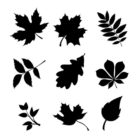 Vector set of black silhouettes of leaves on a white background.のイラスト素材