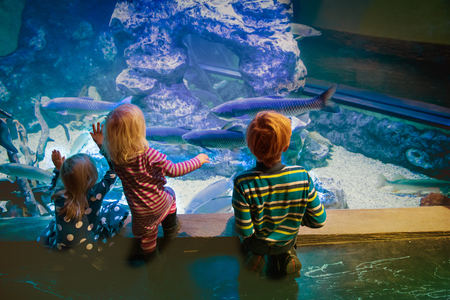 Photo for kids watching fishes in aquarium, learning marine life - Royalty Free Image