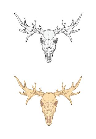 illustration with hand drawn moose skull. Two variants: monochrome and colored. In realistic style. Isolated on withe background. For you design, tattoo or magic craft.