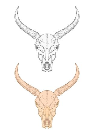 illustration with hand drawn wild buffalo skull. Two variants: monochrome and colored. In realistic style. Isolated on withe background. For you design, tattoo or magic craft.