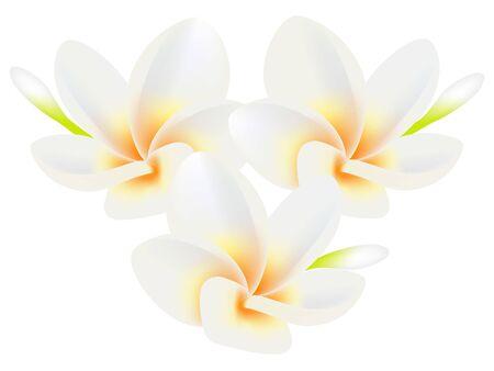 Ilustración de Tropical flowers frangipani (Plumeria) isolated on a white. - Imagen libre de derechos