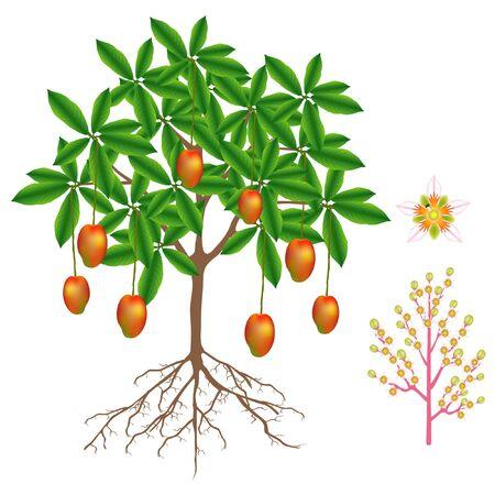 Illustration pour Part of mango plant isolated on white background. - image libre de droit