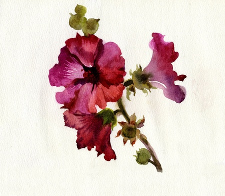 Watercolor Flower Collection: Mallow