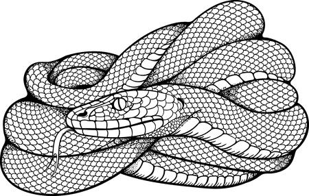 Illustration pour black and white image of coiled snake - image libre de droit